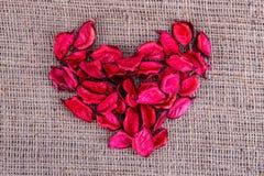 Rose petals canvas Royalty Free Stock Image
