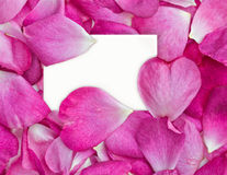 Rose petals with card. Beautiful pink rose petals with white card for your message Royalty Free Stock Photo