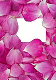 Rose petals with card Royalty Free Stock Photography