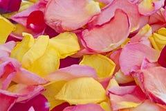 Rose petals carpet Stock Images