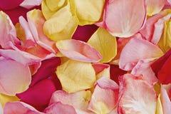 Rose petals carpet Stock Image