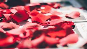 Rose petals close up royalty free stock photos