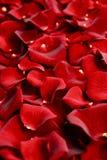 Rose Petals Closeup Stock Images