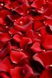 Rose Petals Closeup. Red Rose Petals Backdrop. Floral Theme stock images
