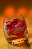 Rose petals in a cocktail. Surrounded by an orange ambience royalty free stock image
