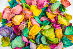 Rose petals. Colorful rose petals background closeup stock images