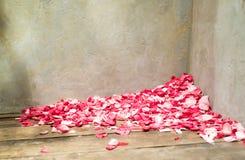Rose Petals in Corner Royalty Free Stock Photos