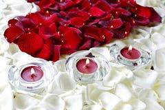 Rose Petals Decoration stock photo