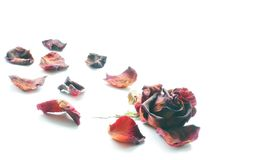 Dried roses on a white background. Rose petals stock image