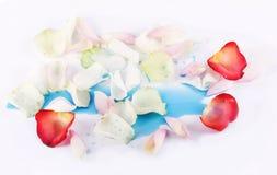 Rose-petals in drops of blue watercolor Royalty Free Stock Photos