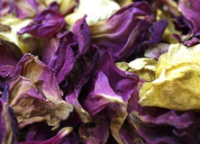 Rose petals royalty free stock images