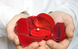 Rose petals and engagement ring / Valentine Stock Photo