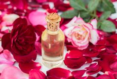 Rose petals and essential oil. Spa aromatherapy. Glass vial with rose essential oil and rose petals on Wooden bowl on a  white wooden background Stock Photography