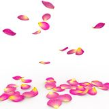Rose petals fall to the floor Royalty Free Stock Photo