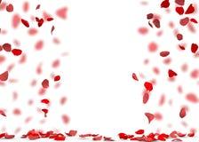 Rose petals fall to the floor Stock Photos