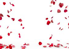 Rose petals fall to the floor Stock Images