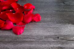 Rose Petals Fallen rouge sur Grey Wooden Table images libres de droits