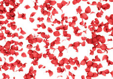 Rose petals falling background Stock Photo