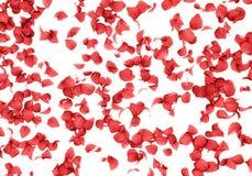 Rose petals falling background Stock Photo