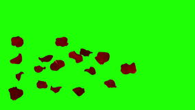 Rose petals falling on green screen stock video footage