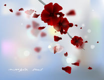 Rose petals Royalty Free Stock Photography