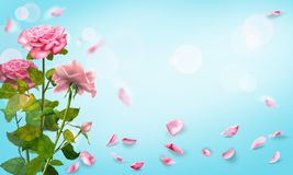 Rose Petals Falling Romance Background. Watercolor Illustration  Royalty Free Stock Image