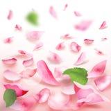 Rose Petals Falling Romance Blank Frame Stock Images