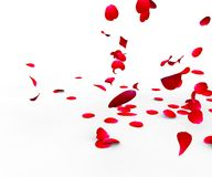 Rose petals falling on a surface. On a white background isolated Stock Photography