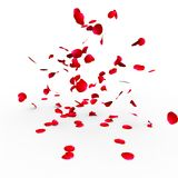 Rose petals falling on a surface Stock Image