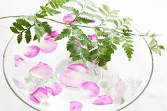 Rose petals and fern Royalty Free Stock Photography