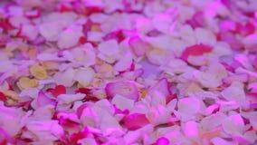 Rose petals on floor Stock Images