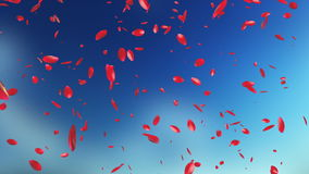Rose Petals Flying, against blurry sky stock video footage