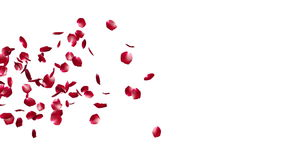 Rose Petals Flying Particles, contre le blanc, longueur courante illustration de vecteur