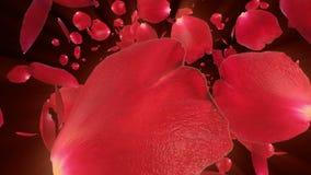 Rose petals Flying towards camera, stock footage stock illustration