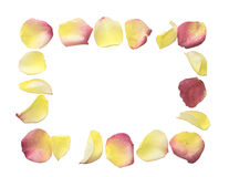 Rose petals forming a frame. Yellow and pink rose petals arranged as a frame over white Stock Photo