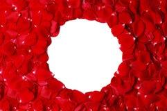 Rose petals frame. Red rose petals wedding frame Royalty Free Stock Images