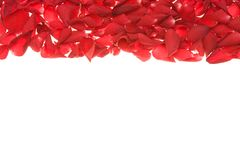 Rose petals frame Royalty Free Stock Photo