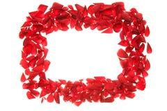 Rose petals frame Stock Image