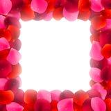 Rose Petals Frame Stock Photo