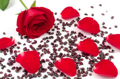 Rose petals and garnet Stock Photo