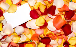 Rose petals greeting. Blank greeting card in a bed of petals Stock Photos