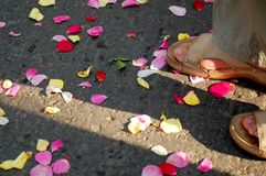 Rose petals on the ground Royalty Free Stock Images