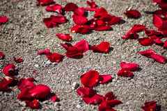 Rose petals Stock Photos