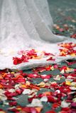Rose petals on ground Stock Photos