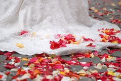 Rose petals on ground Royalty Free Stock Images