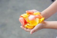 Rose Petals In The Hands av en flicka arkivbild