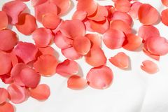 Rose petals. Heap of the red rose petals stock photo
