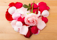 Rose and petals in heart shape Royalty Free Stock Photography