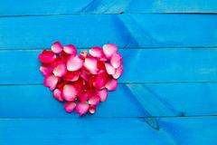Rose petals heart shape on blue wooden background stock image