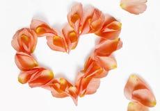 Rose petals (heart shape) Royalty Free Stock Photo